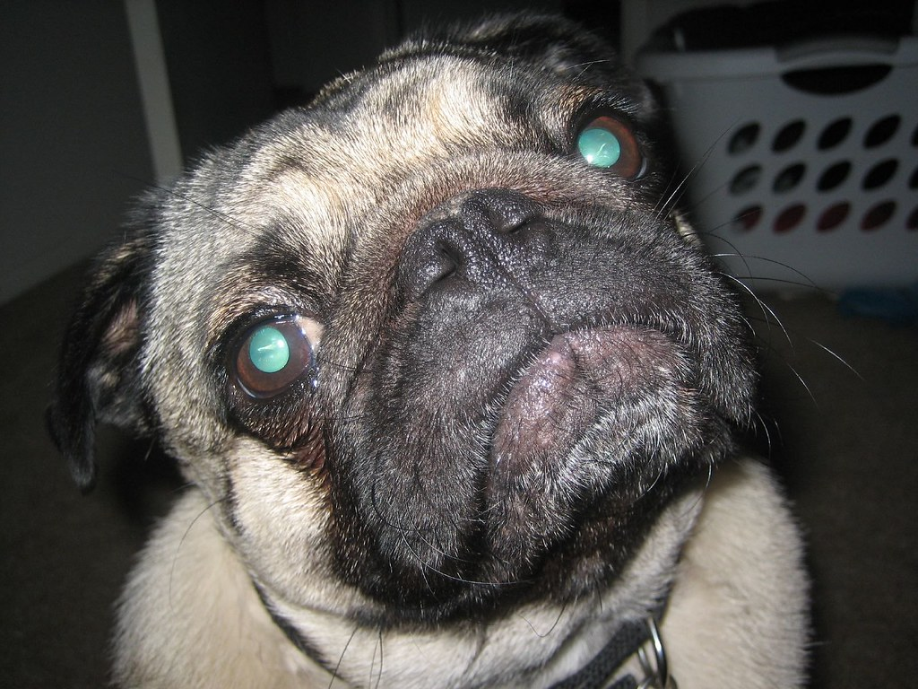 Pug Ugly Infinity Come On You Know You Actually Love