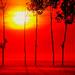 The Rising Sun 3