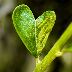 green love | by Michel Khoury
