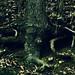 Dark root 3