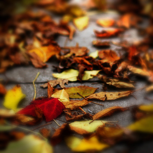 Last of the fall leaves | by -stacey-
