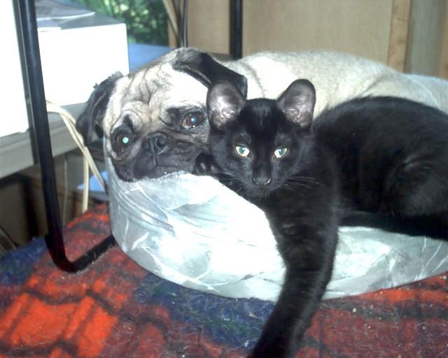 Pug Mommy and Baby Pug