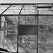 Lyttelton Greenhouse