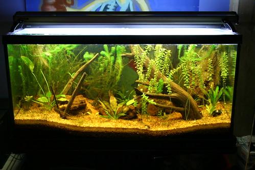 90 gallon amazon tank a 90 gallon amazonian tank housing for Amazon fish tank