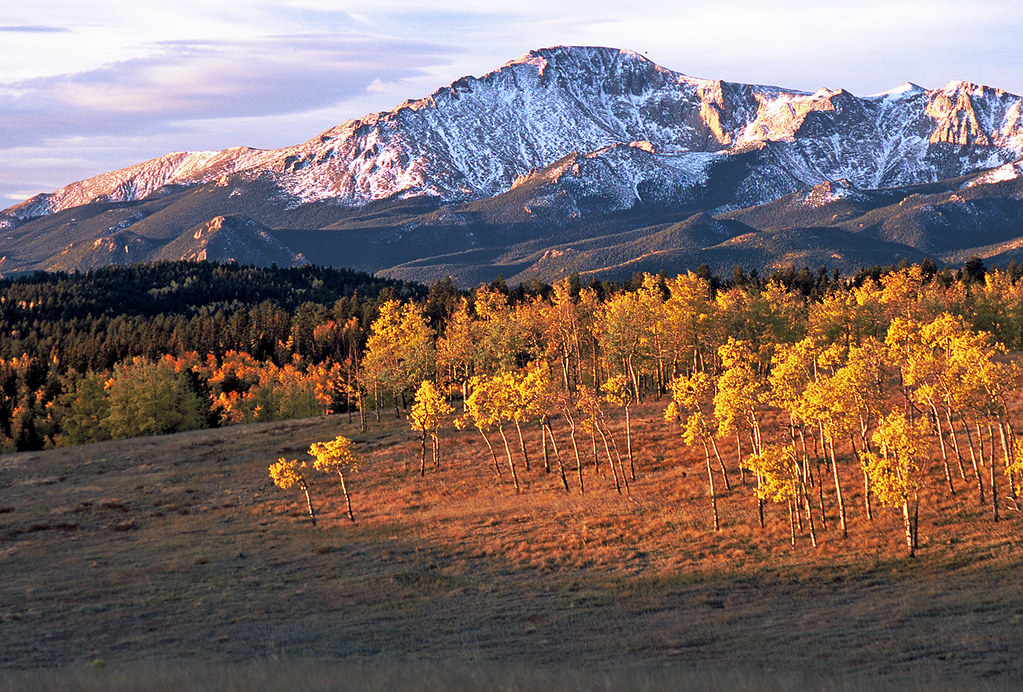 Pikes Peak And Aspens  East Of Woodland Park  Colorado  Co
