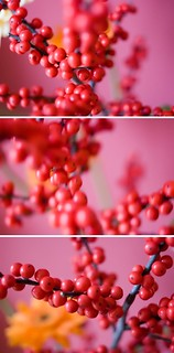 red berries | stechpalme | by barbara°