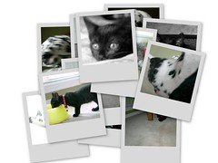 Pet Collage | by J. Chris Vaughan