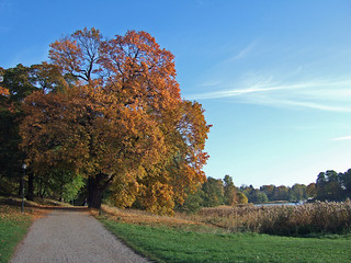 Autumn in Hagaparken 2 | by rymdborje