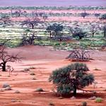 Sossusvlei Landscape