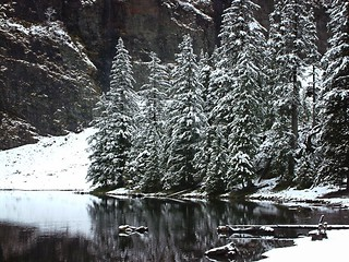 snow falling on fir trees | by Jonathan Wiles
