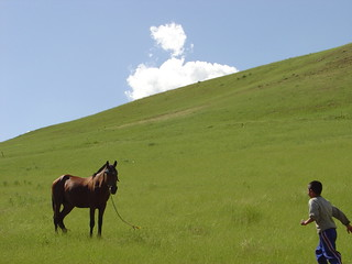 Horse and Son | by Saaeed