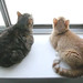 Catloaves in a window
