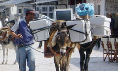 Donkeys with computers in Greece | by davesag