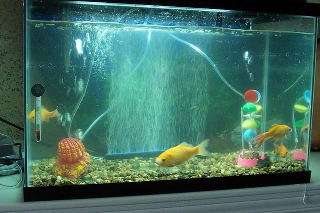 Fish new tank 9 flickr photo sharing for Fish tank camera