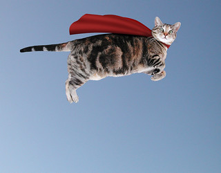 The Caped Kitty flies again | by Kevin Steele