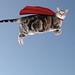 The Caped Kitty flies again