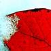 Feuerrot und Eisblau - Snowy Red
