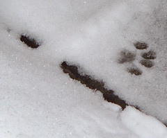 First snow 2005_cat print | by foilbelly