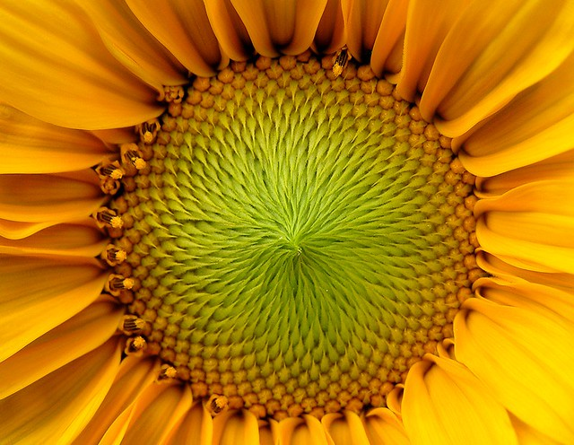 Nature Inside A Sunflower A Few Weeks Back I Grabbed