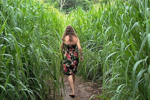 hm jungle maddy walks | by mother_meuss