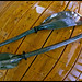 Werner Kalliste Bent Shaft Carbon 2 piece Paddle