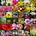 Flora Fauna Mosaic