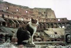 Colosseum Kitty | by kelly-bell