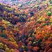 A Sea of Fall Color