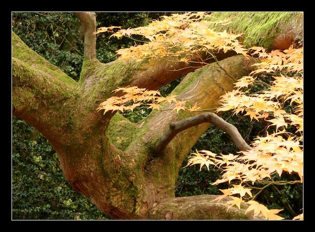 Recent Photos The Commons Galleries World Map App Garden Camera Finder ...