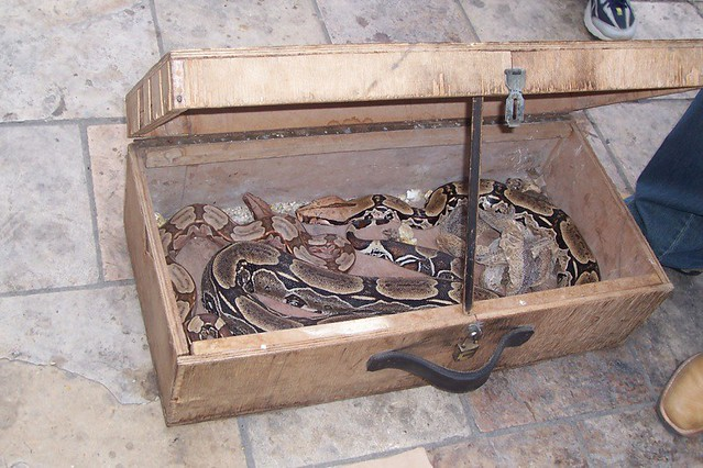 Snakes in a Box | Explore comingstobrazil's photos on Flickr ...