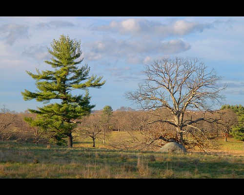 Two Trees | by TrombaMarina