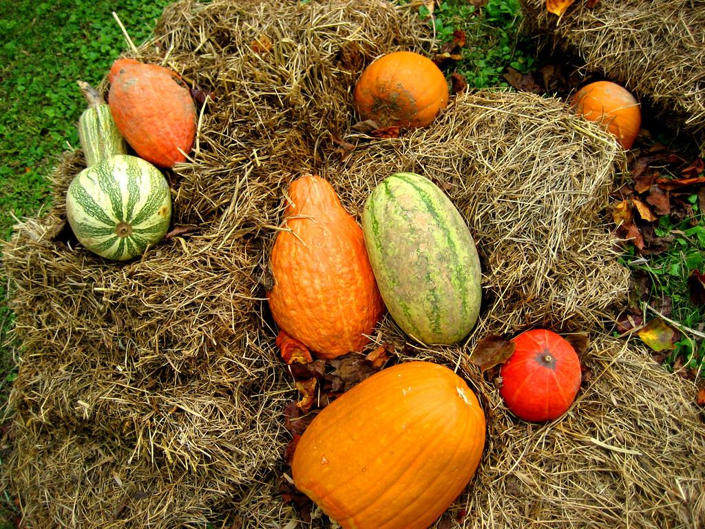 fall rot | David Cohen | Flickr