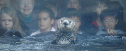 Southern Sea Otter | by Saveena (AKA LHDugger)