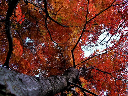 Autumn leaves | by Blue Lotus