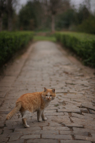 Never Look Back (Cat version) | by memetic