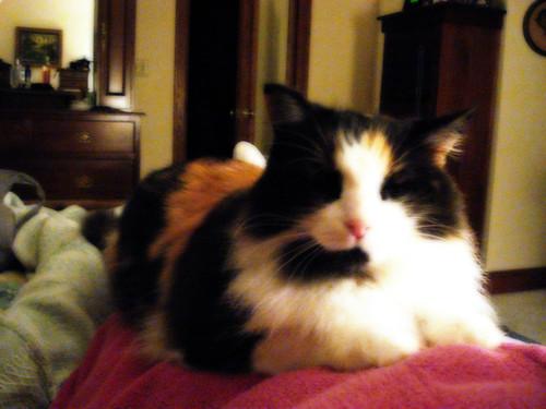 Cat Wants Attention Won T Let Me Pet Her