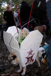 chinese takeout pug | by istolethetv