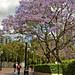 09 sakura-ish looking trees