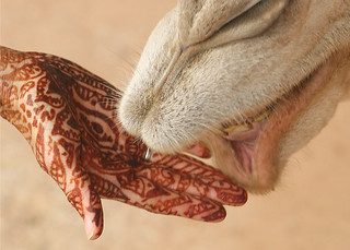 Henna Hand with Camel in Morocco | by DavidDennisPhotos.com