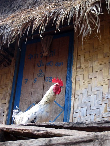 Rooster by a door in Nalan Khmu village - Nam Ha River | by Alexandra Moss