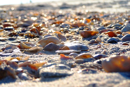 Shell Collectors' Paradise | by shanerhyne