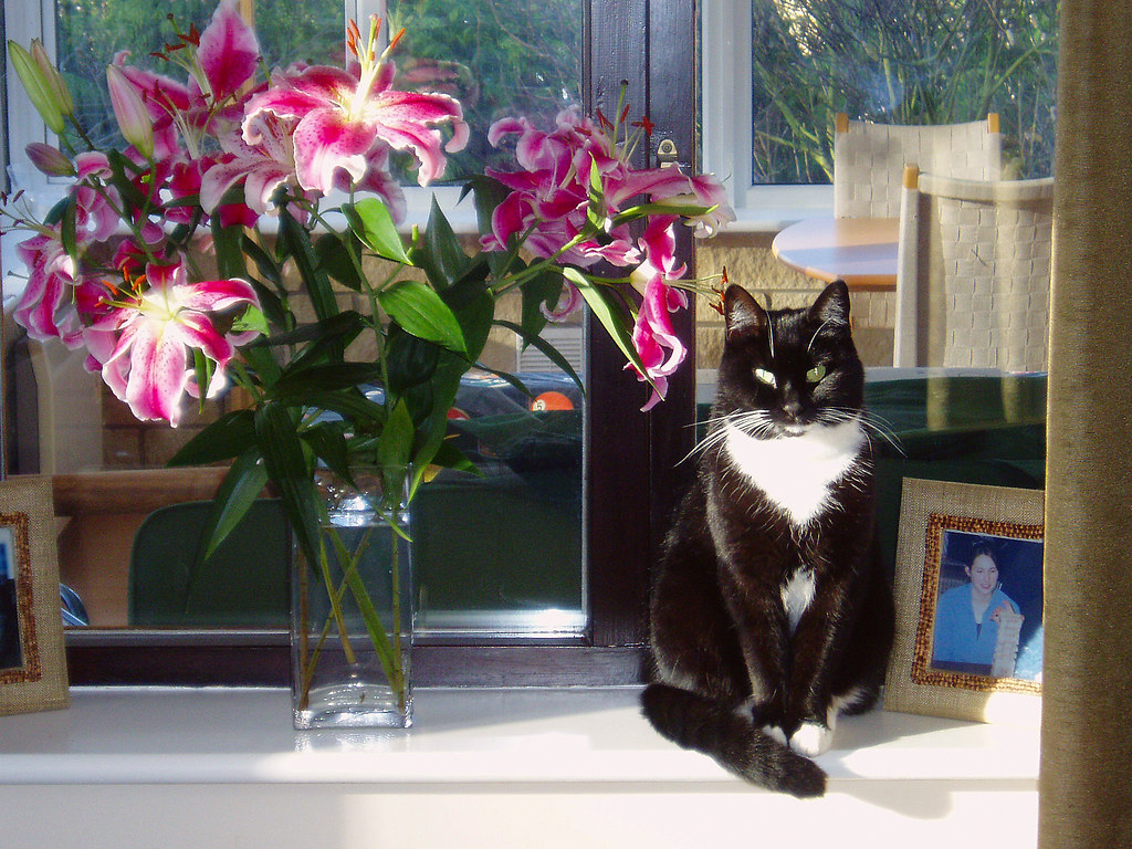 Cat With Lilies Colin Howley Flickr
