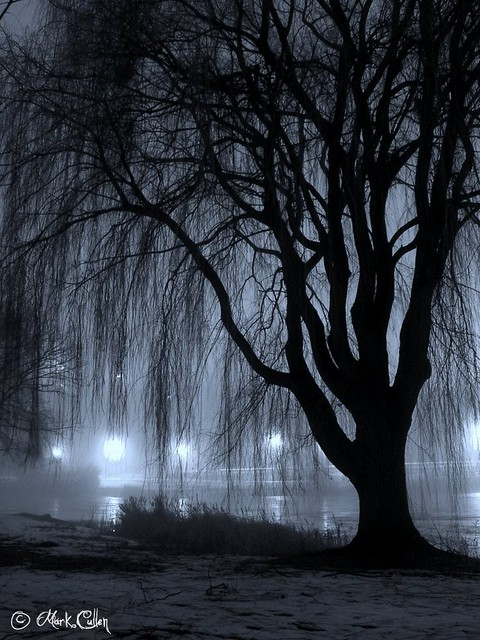 Night Willow | A willow tree alongside Juneau Park Lagoon ...