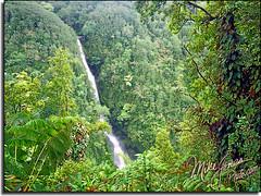 Near Akaka falls