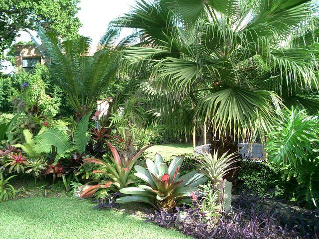 jardines con bromelias y orquideas 6 bromelias
