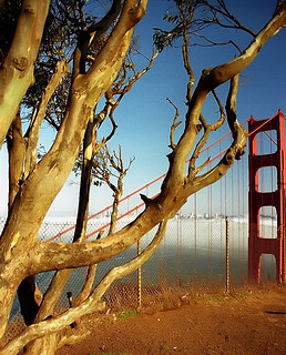 "San Francisco - Golden Gate Bridge ""Branching Over"" 