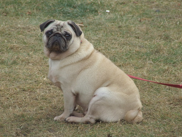 Hutch's Pug to Vodafone's ZooZoo – A story of successful brand transition.