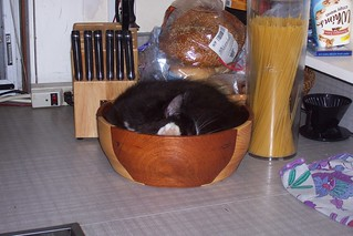 Baby Sundae sleeping in his salad bowl bed.. | by lorac's