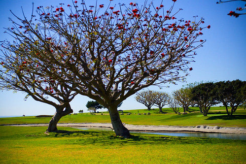Pepperdyne Trees in Bloom | by ☻M€rcỲ☺