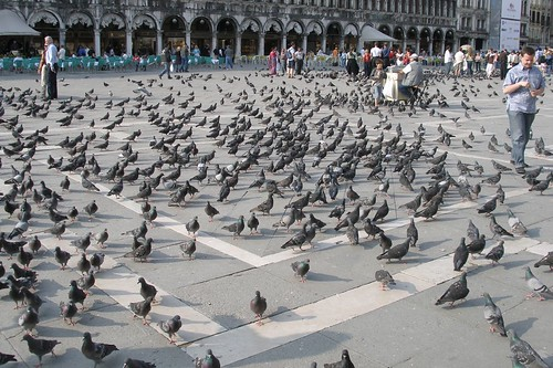 San Marco pigeons (2006-05-580) | by Argenberg